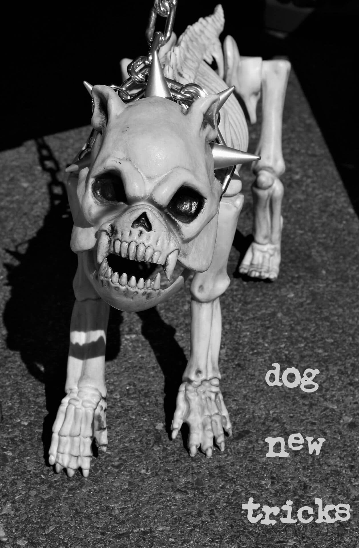 "Angry bulldog skeleton with spiked collar and the anime-hem blog title ""Dog New Tricks"""